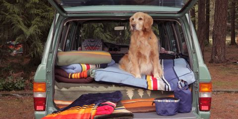 Dog, Canidae, Vehicle, Car, Sporting Group, Carnivore, Vehicle door, Setter, Dog breed, Family car,