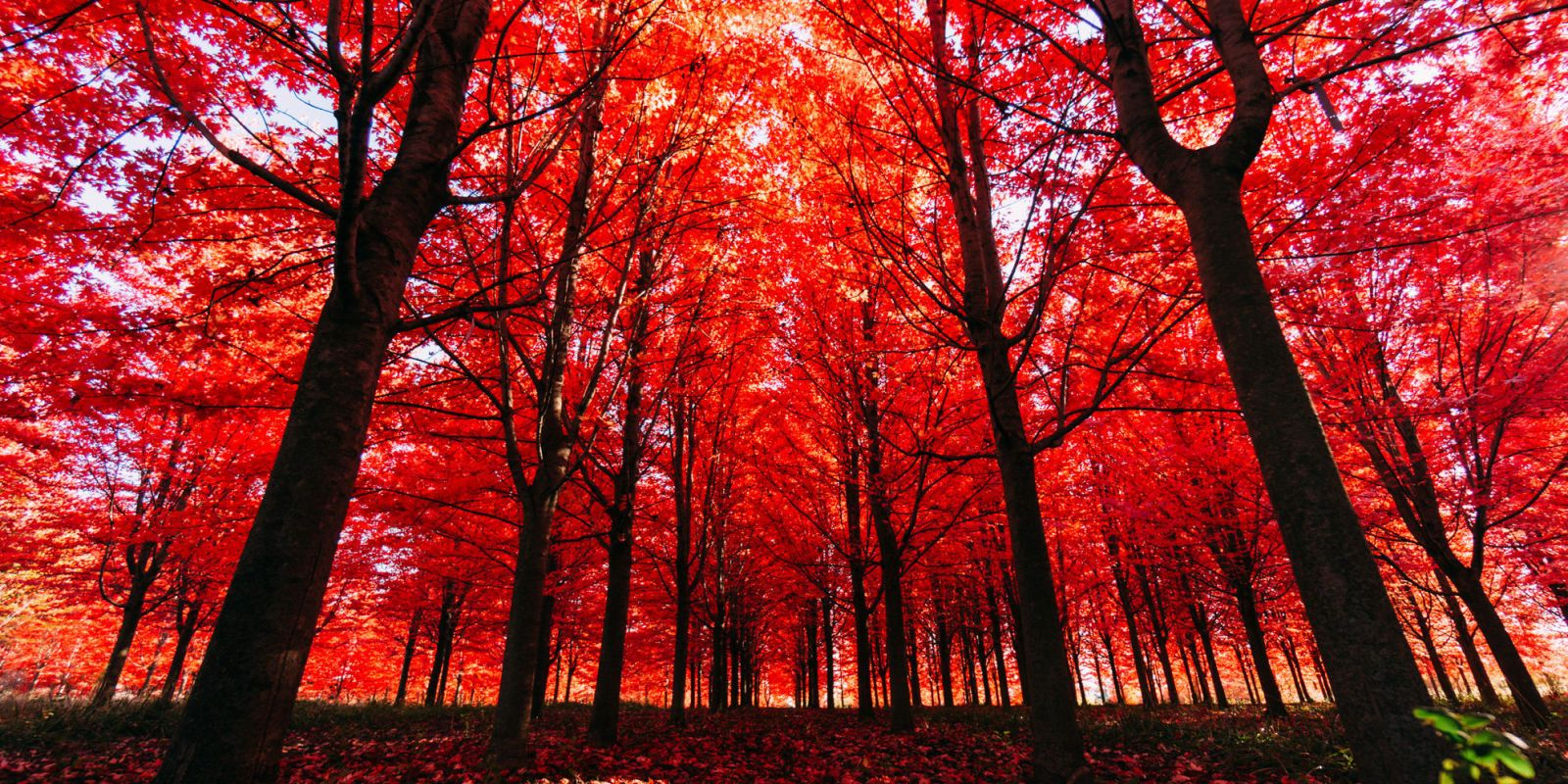 10 Beautiful Fall Quotes to Celebrate the Season