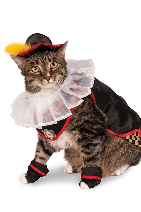 Pet Cat Halloween Costumes Cute Ideas For
