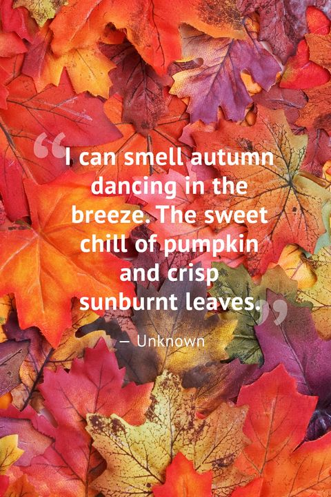 10 Beautiful Fall Quotes - Best Sayings About Autumn