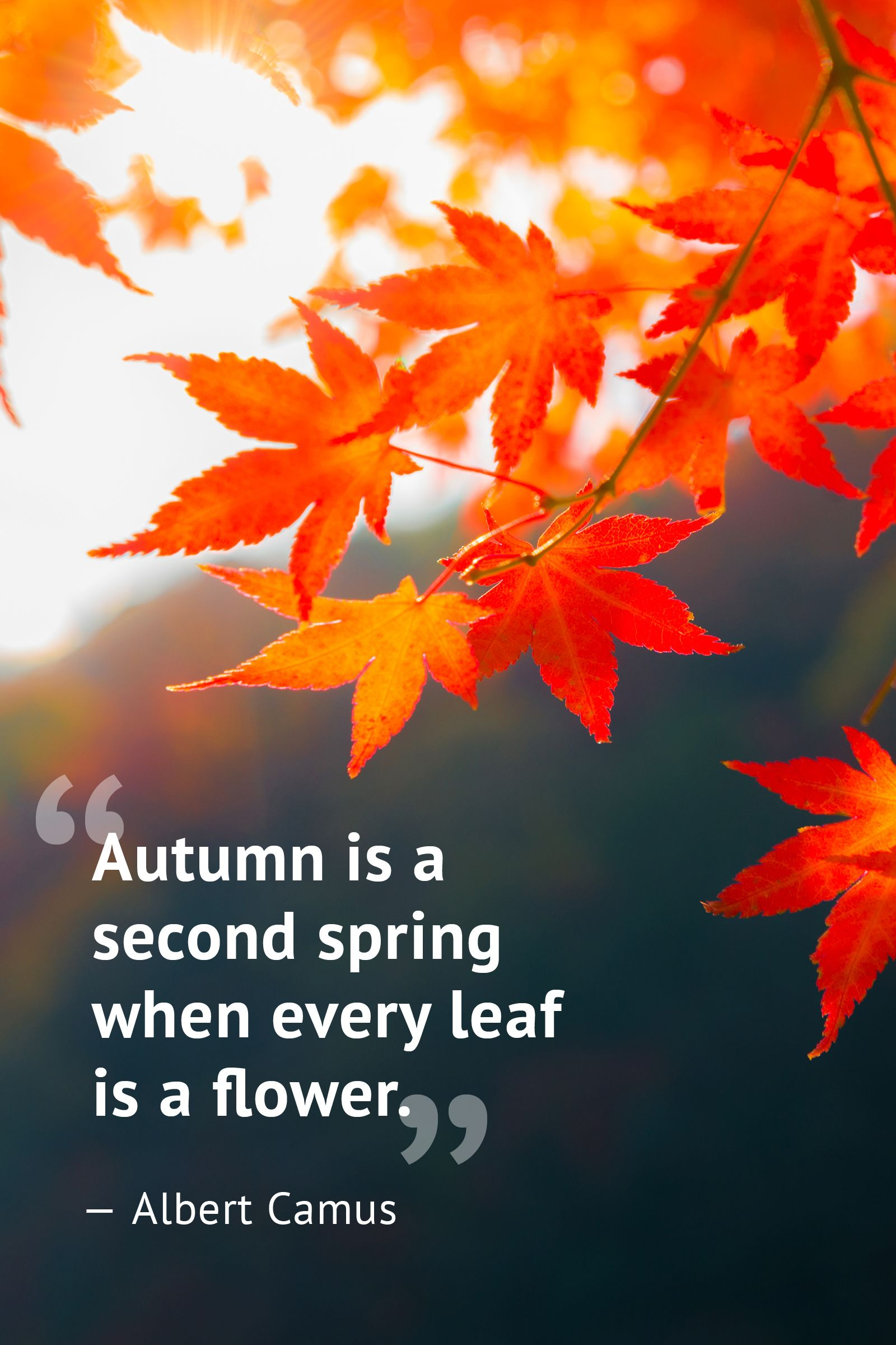 The most beautiful statements about the autumn