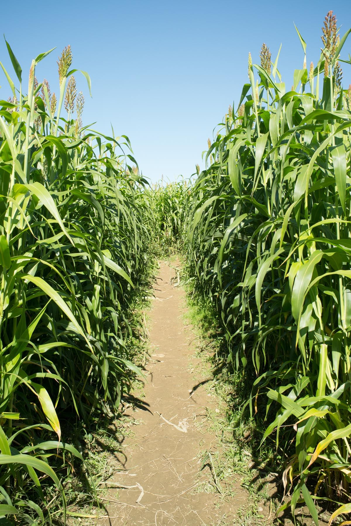 get lost in a corn maze fall date idea