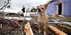 pet rescue after natural disaster