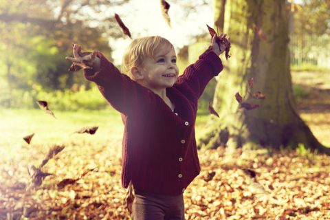 People in nature, Leaf, Tree, Autumn, Branch, Woodland, Happy, Child, Sunlight, Forest,