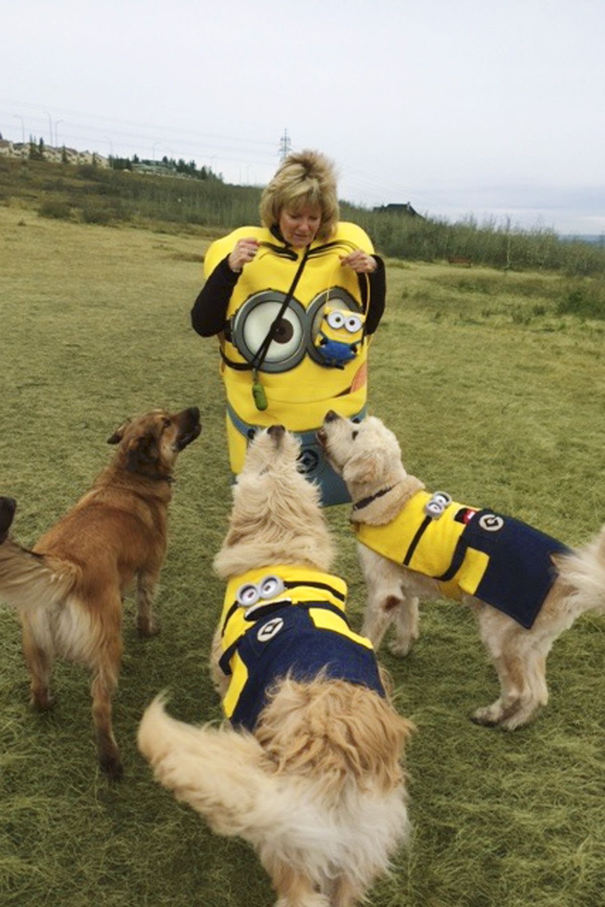 Cool Fake Throw Ball Adorable Dog - 1505755689-minion-dogs  Pictures_304998  .jpg