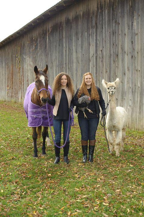 Horse, Pasture, Farm, Grass, Livestock, Fun, Rural area, Pack animal, Plant, Mare,