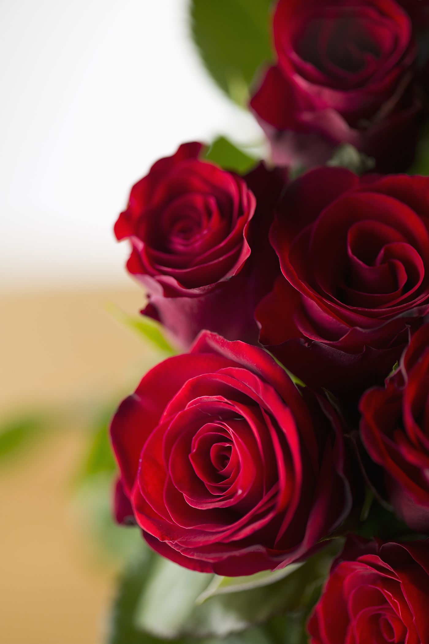 red roses Flower Meanings