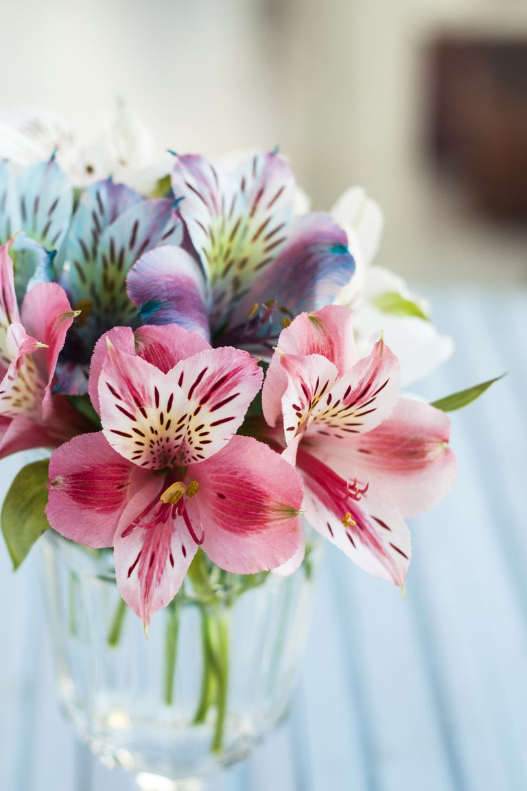 12 romantic flower meanings symbolism of different kinds of alstroemeria izmirmasajfo