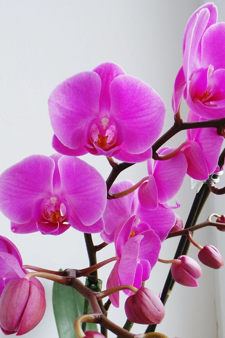 12 romantic flower meanings symbolism of different kinds of orchids buycottarizona Gallery