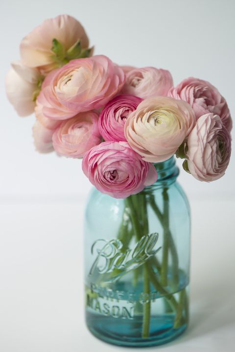 12 romantic flower meanings symbolism of different kinds of ranunculus mightylinksfo