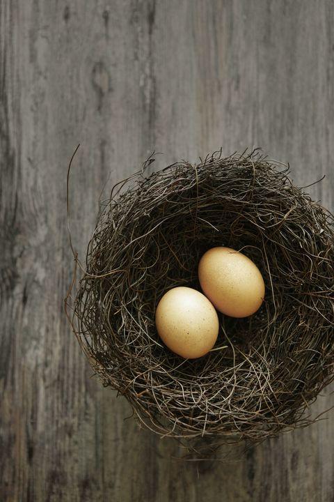 Egg, Nest, Bird nest, Egg, Twig, Bird,