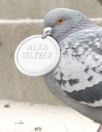 alka seltzer and birds