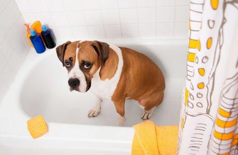 How to De-Skunk Your Dog or Cat