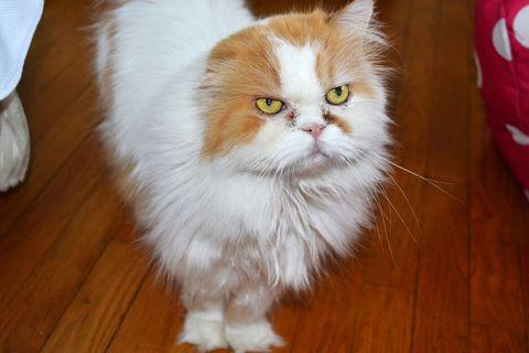 Romeo the cat