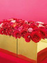 Mini–Rose Hedges