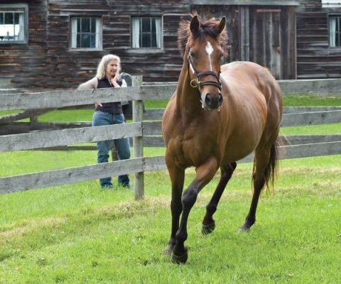 How Racehorses Are Helping Veterans Battle PTSD