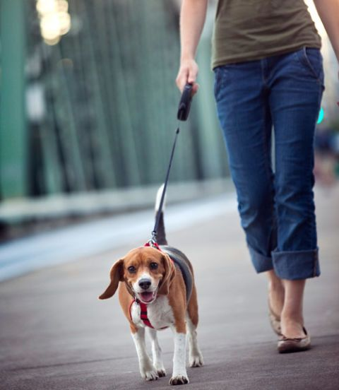 woman walking beagle dog