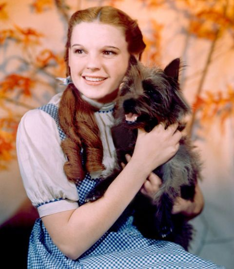 Toto from Wizard of Oz