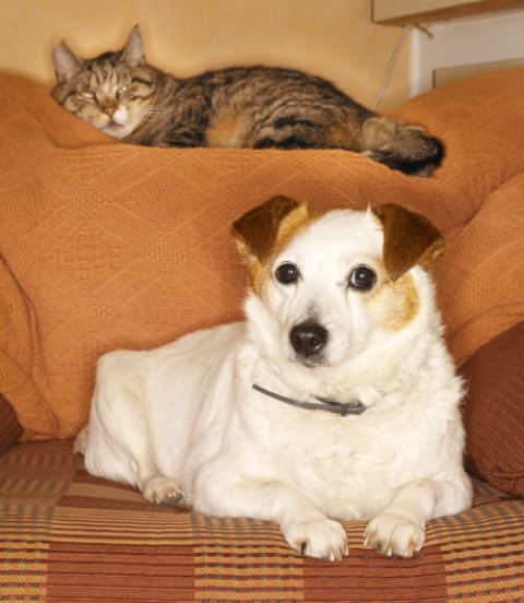 dog and a cat on a couch