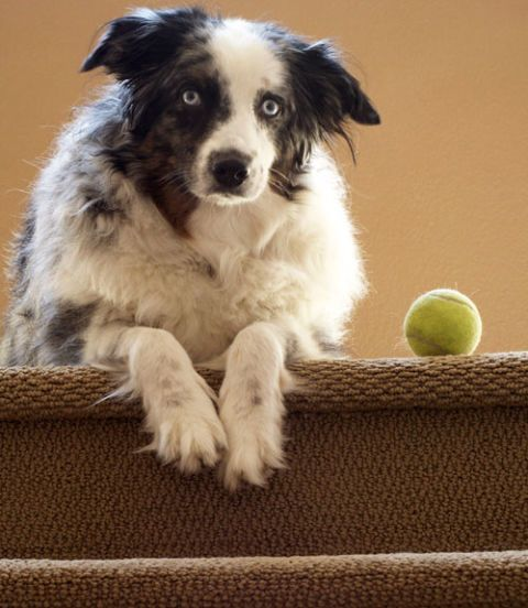 dog playing with a ball on the stairs