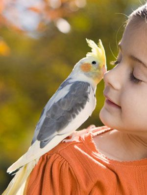 Pet Care Tips Animal Facts about Birds at WomansDay com