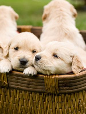 Pet Care Tips Puppy Health Questions And Answers At Womansday Com