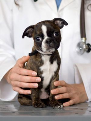 Pet Care Tips Common Pet Health Problems For Puppies At Womansday Com