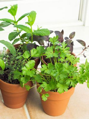 Indoor Vegetable Garden Tips at WomansDaycom Winter Gardening Tips