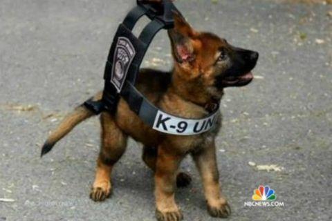 Bulletproof Dog Vest