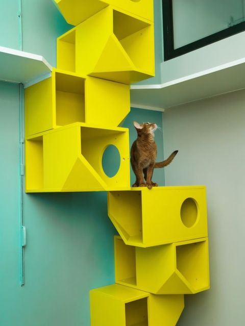 Cat Furniture Cat Climbing Structures