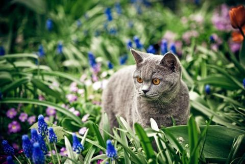 Myth: Cats can explore outdoors on their own.