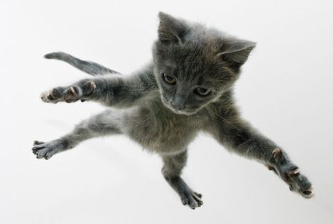 Myth: Cats always land on their feet when they fall.