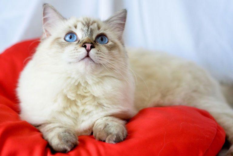 Cat Behavior Problems Cat Habits
