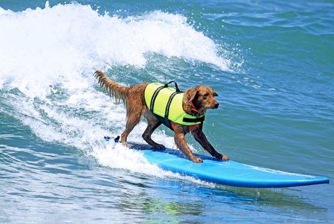 dog on a surf board