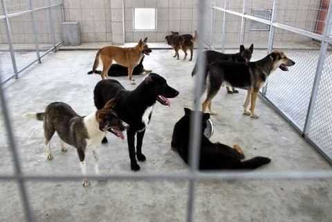 dog at a shelter