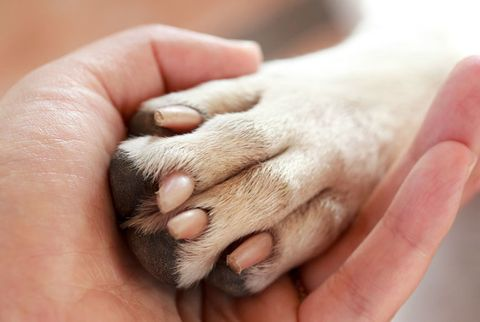 Flea and Tick Prevention for Dogs - Flea and Tick Control