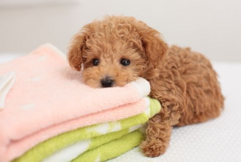 Puppy Towels
