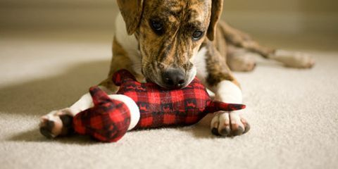<p>Whether you're about to bring home a new dog or cat or you've had pets for a while, pet-proofing your house is one of the best ways to protect your four-legged friends. But some seemingly harmless fixtures of your home, like your purse and your laundry, can pose serious risks to your pets. Read on to find out which household items and areas can be dangerous and how to keep your furry family members safe and sound. </p>