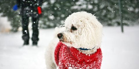 """<p><span>The cold and snow can make </span><a href=""""http://www.womansday.com/life/pet-care/dog-exercise"""" target=""""_self"""">exercising with your dog</a><span> difficult, but it's far from impossible. To keep her in shape, try these creative solutions. Just don't forget to refill the water bowl. Dogs need to drink before, during and after any activity, even in winter.</span></p>"""