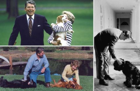 <p>Clockwise from left: Pres. Ronald W. Reagan, wife Nancy, and Rex returning to White House after visit to Camp David; Ronald Reagan pets his dog Lucky outside the White House, Ronald Reagan and wife Nancy play with their dogs Victory and Millie on their ranch.</p>