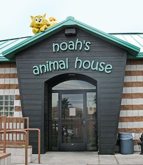 "<p>Noah's Animal House opened in 2007, and the 1,500-square-foot, 32-space bungalow (designed to resemble a giant doghouse) has since been filled with dogs, cats, even the occasional hamster or turtle. While the women at Shade Tree, who usually stay between 30 and 90 days, heal through self-empowerment classes and therapy, the animals are also given a fresh start. A local veterinarian, Tiffany Paul, donates her time to treat or operate on injured animals, and grants from organizations like Build-A-Bear and NASCAR driver Ryan Newman pay for dental care, vaccinations, spaying and neutering. Women staying at The Shade Tree sign an agreement to keep up the daily care of their pet, including feeding, walking and changing litter boxes, in part because the routine can speed emotional healing. ""Maintaining responsibility for their pets helps these women move forward and becomes part of their recovery process,"" says Staci. There are also two ""cuddle rooms"" at Noah's, where women can hug their pets.</p>"