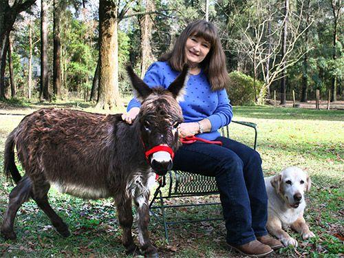 shortest donkey