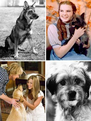 "<p>From big-time flicks to buzzed-about commercials, ""man's best friend"" is a fixture on film. After all, cuddly canines are almost as fun on-screen as they are off. But some Hollywood hounds had humble beginnings, being ""discovered"" in shelters and war-torn towns. Click through to meet the most famous rescue dogs and read their inspiring stories.</p>"