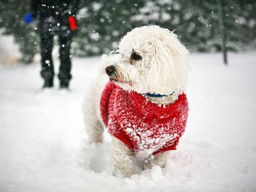 "<p><span>The cold and snow can make </span><a href=""http://www.womansday.com/life/pet-care/dog-exercise"" target=""_self"">exercising with your dog</a><span> difficult, but it's far from impossible. To keep her in shape, try these creative solutions. Just don't forget to refill the water bowl. Dogs need to drink before, during and after any activity, even in winter.</span></p>"