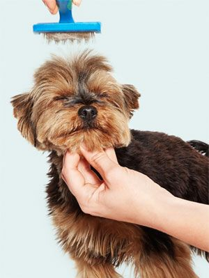 <p>Dirty paws? Stinky coat? Gear up your grooming supplies and turn on the faucet--it's time for a good canine cleaning. Whether you have a picky pup or well-behaved dog, this go-to guide promises a stress-free suds session.</p>