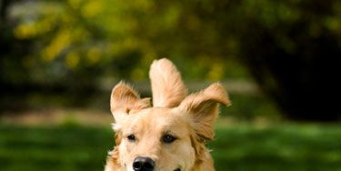 <p>Chunky kitty? Pudgy pup? Keeping your pet from tipping the scales can be tough. Help him stay healthy and live longer with a little extra motivation. Try these toys and tricks to get your couch-loving pet moving.</p>