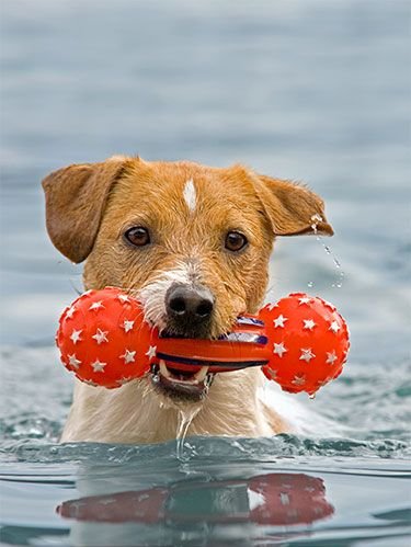 <p>Dogs are natural swimmers, but some take to the water more readily than others. Whether you're on a beach in a pool, following these pointers will guarantee your pup a blast the next time he takes a dip.</p>