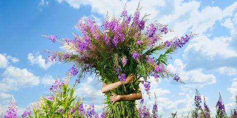 Purple, Lavender, Shrub, Flower, Wildflower, Violet, Flowering plant, Meadow, Grassland, Grass family,