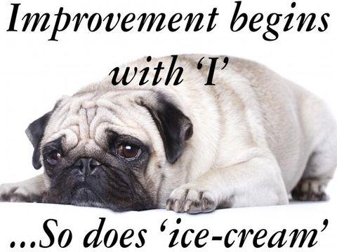 Skin, Dog, Pug, Carnivore, Mammal, Snout, Toy dog, Wrinkle, Font, Puppy,