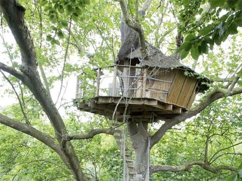 Branch, Tree, Tree house, Twig, Trunk, Thatching, Hut, Jungle, Tree stand, Village,